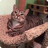 Adopt A Pet :: Ana - Bensalem, PA