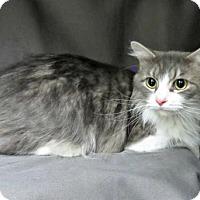 Adopt A Pet :: Stella - Herndon, VA