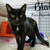 Adopt A Pet :: Blair - Whitewater, WI