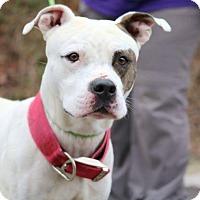 Adopt A Pet :: Petey - Covington, TN