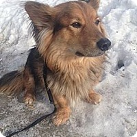 Adopt A Pet :: Shadow - Saskatoon, SK