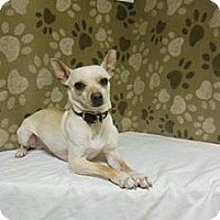 Adopt A Pet :: Spanky - Gary, IN