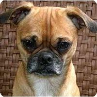 Adopt A Pet :: Cassius - Mays Landing, NJ