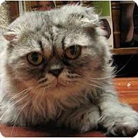 Adopt A Pet :: Isaac - Davis, CA