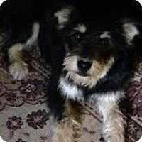Adopt A Pet :: Danity - Austin, AR