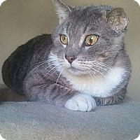 Adopt A Pet :: Gordie - Irvine, CA