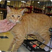 Adopt A Pet :: FOUND CAT - Washington Terrace, UT