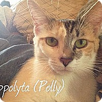 Domestic Shorthair Cat for adoption in Lenhartsville, Pennsylvania - Polly