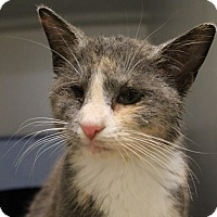 Adopt A Pet :: Philly - Union, KY