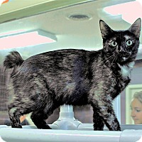 Where Can I Bring My Cat For Adoption In Ct