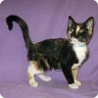 Adopt A Pet :: Zahara - Powell, OH