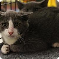 Adopt A Pet :: Wesley - Sacramento, CA