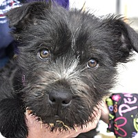 Adopt A Pet :: Kaia - Meridian, ID