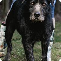 Adopt A Pet :: Jax - Marion, NC