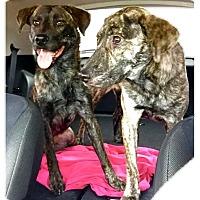 Adopt A Pet :: Mocha and Marble - Houston, TX