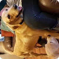Adopt A Pet :: Kimber - Edmond, OK