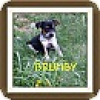 Adopt A Pet :: Brumby (DC) - Hagerstown, MD