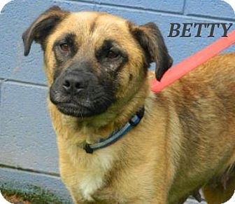 German Shepherd Dog/Black Mouth Cur Mix Dog for adoption in Baltimore, Maryland - Betty