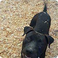 Adopt A Pet :: Boomer - Livingston Parish, LA