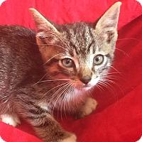 Adopt A Pet :: BEN - Corona, CA