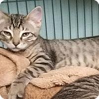 Adopt A Pet :: Ben - Tomball, TX
