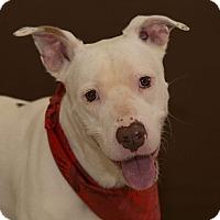 Adopt A Pet :: Rigsby - Flint, MI
