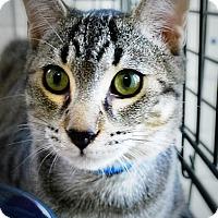 Adopt A Pet :: Aramis - Casa Grande, AZ