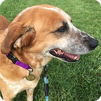 Hound (Unknown Type) Mix Dog for adoption in LaGrange, Kentucky - BARNEY