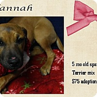 Adopt A Pet :: Hannah - Jefferson City, TN