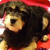 Adopt A Pet :: Benji - Vacaville, CA