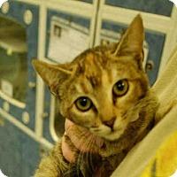 Adopt A Pet :: *GINGER - Long Beach, CA
