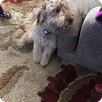 Adopt A Pet :: Mocha#2 - Sparta, NJ