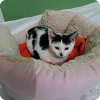 Adopt A Pet :: Dottie - Whitehall, PA