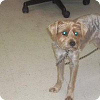 Adopt A Pet :: Toby (foster needed-URI) - Gulfport, MS