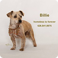 Adopt A Pet :: Billie - Sherman Oaks, CA