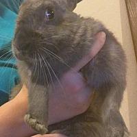 Adopt A Pet :: Hop - Mesa, AZ