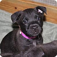 Adopt A Pet :: ANGIE - Loxahatchee, FL