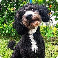 Adopt A Pet :: Butler - kennebunkport, ME