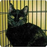 Adopt A Pet :: Shiloh - Medway, MA