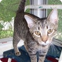 Adopt A Pet :: Hunter - New Richmond, OH