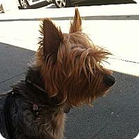 Adopt A Pet :: Georgie - North Hollywood, CA