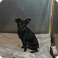 Adopt A Pet :: Hank - Linden, TN