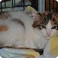 Adopt A Pet :: Lissa - Island Park, NY