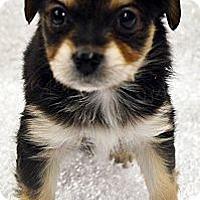 Adopt A Pet :: Kona-Adoption pending - Bridgeton, MO