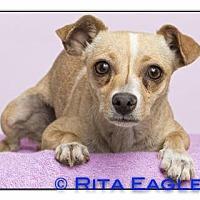 Adopt A Pet :: Ester - Phoenix, AZ