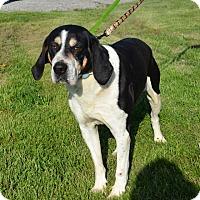 Adopt A Pet :: Cooper - DuQuoin, IL