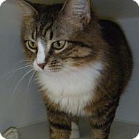 Adopt A Pet :: Josie - Hamburg, NY