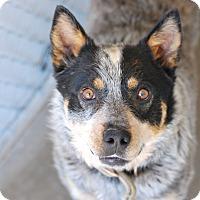 Adopt A Pet :: Tucker - Buffalo, WY