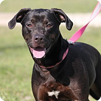 Adopt A Pet :: Gypsy II - Denton, TX
