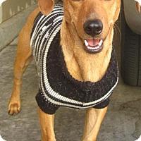 Adopt A Pet :: Dugan - Fresno, CA